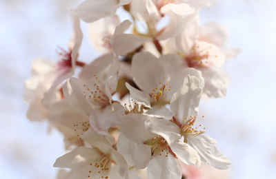 【写真】今日の目黒川の桜! 桜も人も満開の中目黒の様子の写真39枚です。