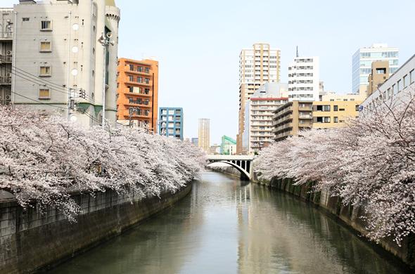 sakura_taikobashi