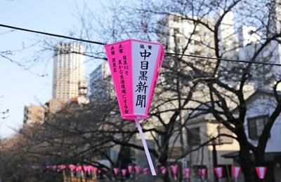 【桜2014】開花目前!今週末は見頃に突入? 本日の桜レポート&<告知>の告知。