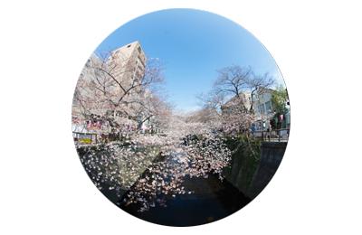 【桜2017】今年も見事に満開アーチが完成した目黒川の桜を写真で紹介。フォトグラファーMIRAK∞L(ミラクール)さんの作品もフィーチャー。